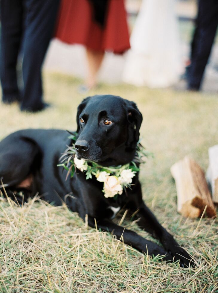 """""""Our family stood around us during the ceremony while our dog ran around and chased squirrels,"""" Sarah says. """"We had to have him around all day—he is our love child!"""""""