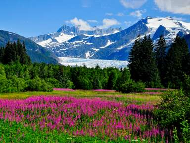 Mendenhall Glacier in Juneau, AK with Fireweed in bloom