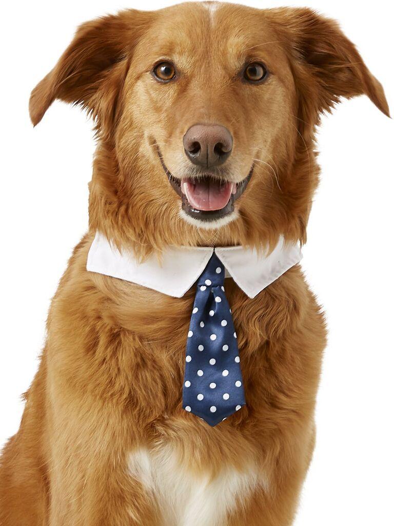 Dog shirt collar and necktie