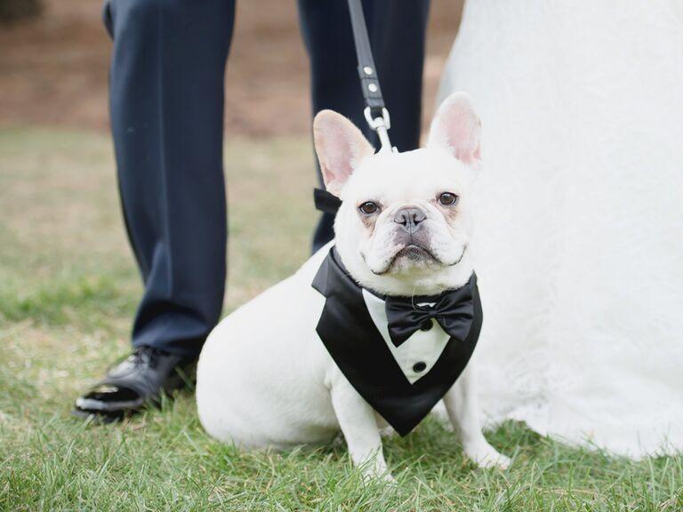 Dog wedding tuxedo