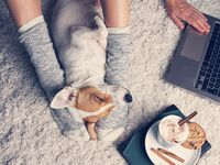 Woman relaxing with dog, computer and hot chocolate