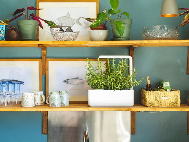 White indoor smart garden on shelf in kitchen