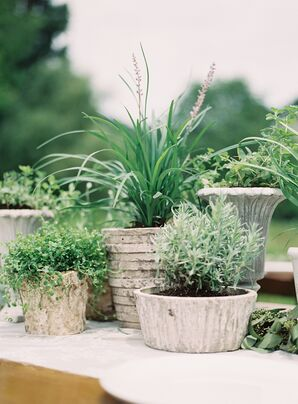 Organic Potted Plant Centerpieces