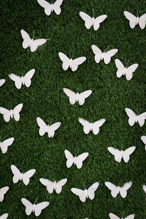Butterfly-Themed Living Wall