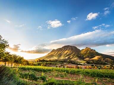 Wine region near Stellenbosch, South Africa