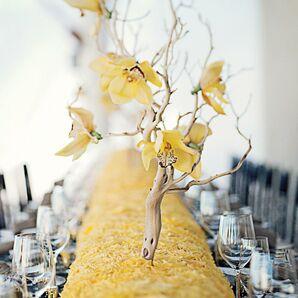 Manzanita Branches with Yellow Blooms