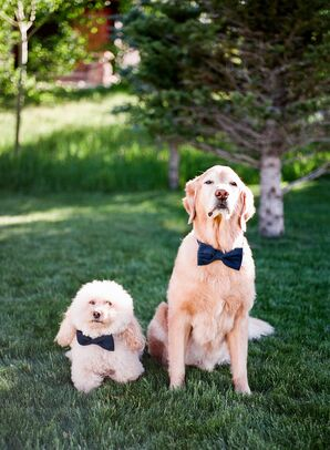 Dogs Wearing Bow Ties for Wedding at Devil's Thumb Ranch in Tabernash, Colorado