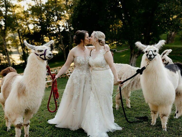 Brides kissing next to llamas at cottagecore wedding