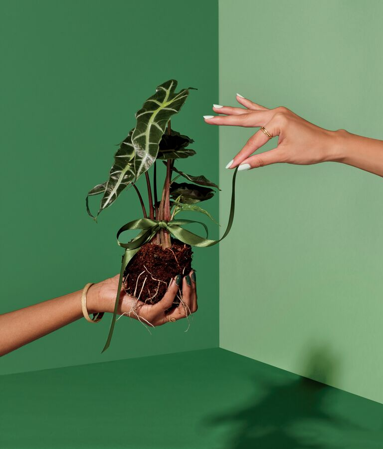 Hand holding plant and soil