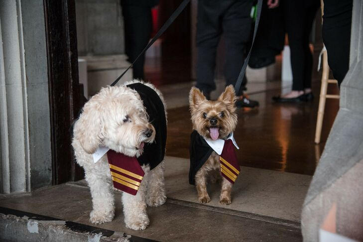 Harry Potter-Inspired Pet Wedding Outfits