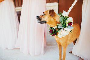 Ivory and Burgundy Wedding Dog Flower Collar