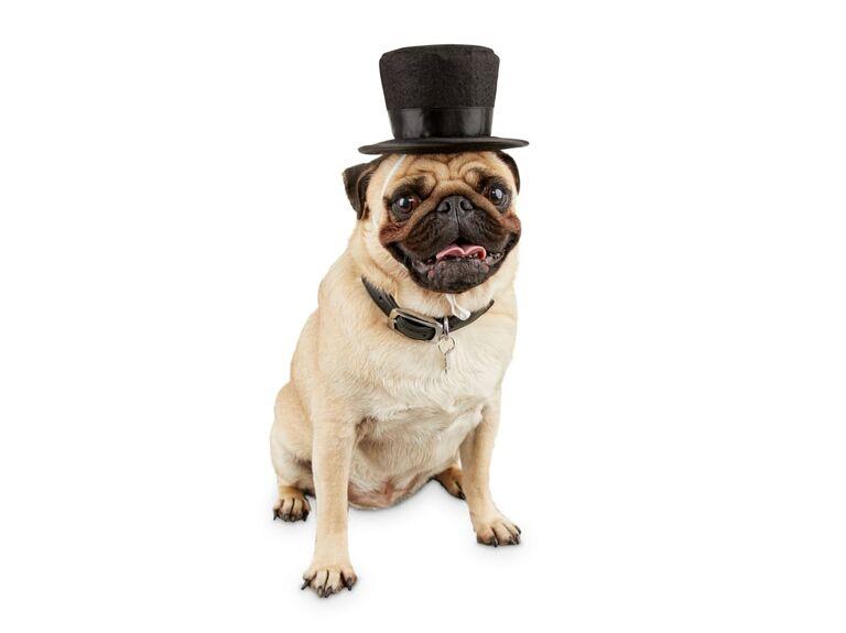 Dog wedding top hat