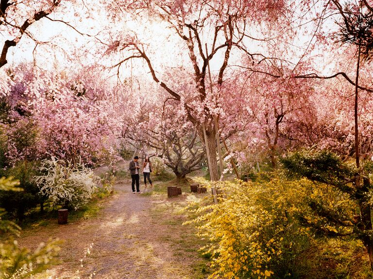 Couple admiring cherry blossom trees in Kyoto Park