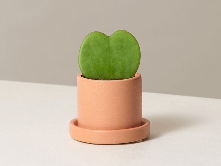 Cute succulent affordable bridesmaid gift