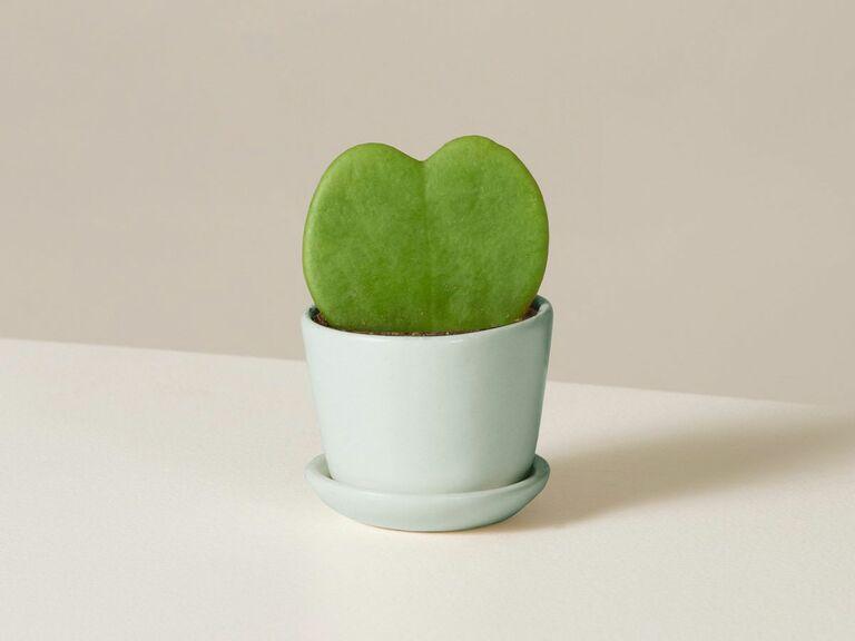 heart shaped succulent