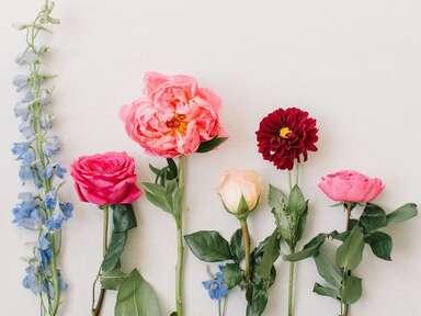 Assortment of fresh flower stems lined up