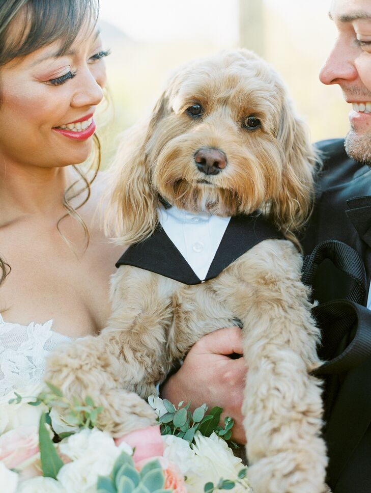Couple Posing With Dog in Suit in Scottsdale, Arizona