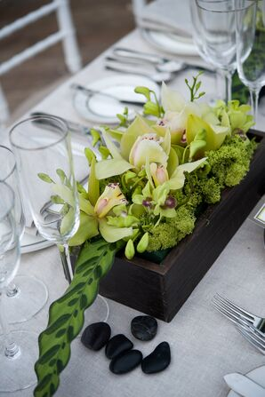 Natural Green Orchid and Moss Centerpiece