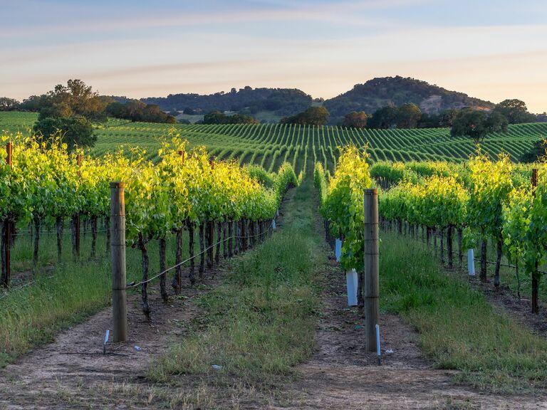 Sonoma winery california