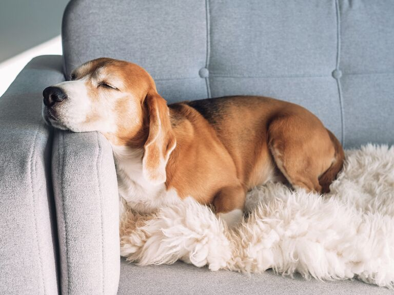 The Coolest Registry Finds for Your Other True Love...Your Dog!