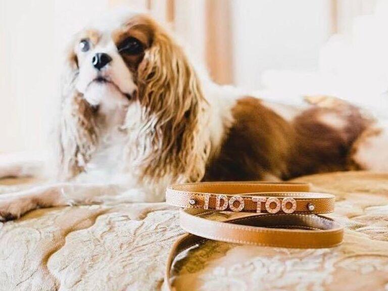 Bedazzled dog wedding leash