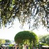 This Ranch Wedding in Saint Helena, California, Was the Epitome of Farm to Table