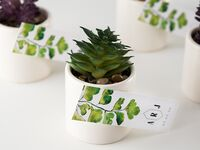 Set of succulents in white planters and personalized monogram tag