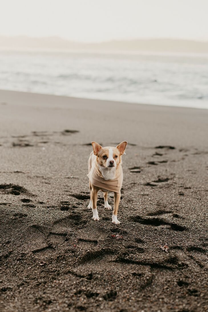 Small Dog on Beach During Sunrise Elopement in California