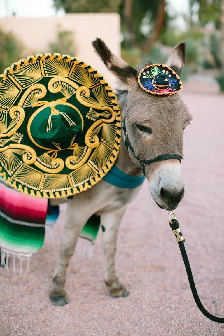 Mexico destination wedding with a donkey beer waiter