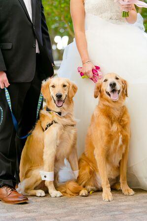 Golden Retriever Wedding Dogs With Bow Tie