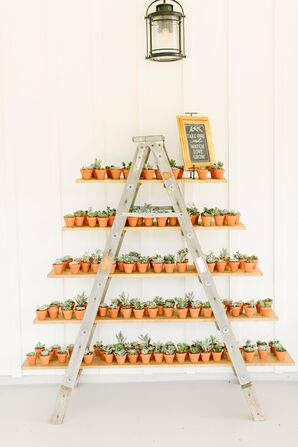 Take-Home Potted Succulent Favors