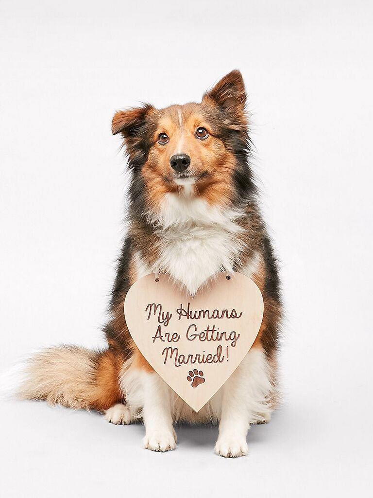 My Humans Are Getting Married sign dog wedding attire