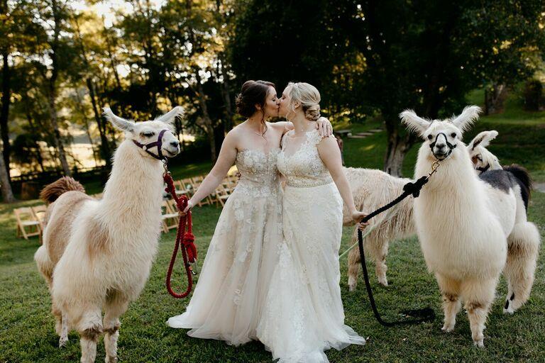 LGBTQ+ couple sharing a kiss and posing with llamas