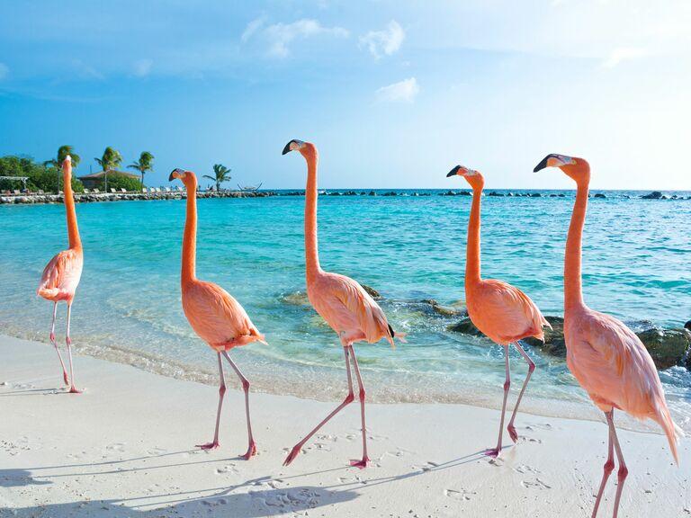 Aruba beach flamingos