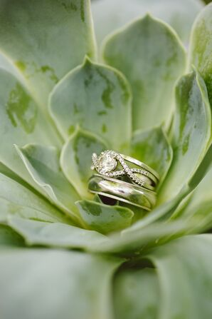 Engagement and Wedding Rings in Succulent