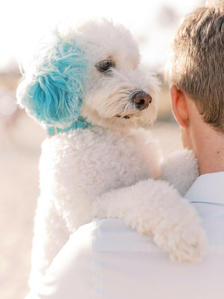 Pet Dog at Beach Wedding in San Diego