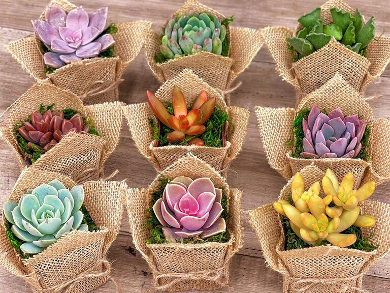 Colorful succulents in burlap wrap