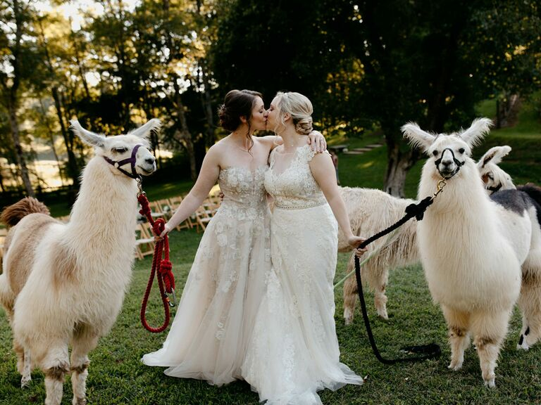 Brides wearing cottagecore wedding dresses with llamas at wedding