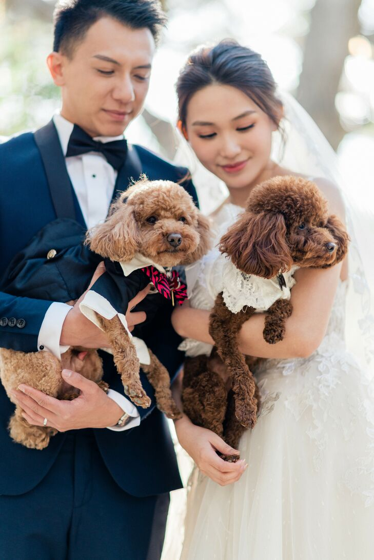 Couple Holding Two Poodles Dressed in Wedding Attire