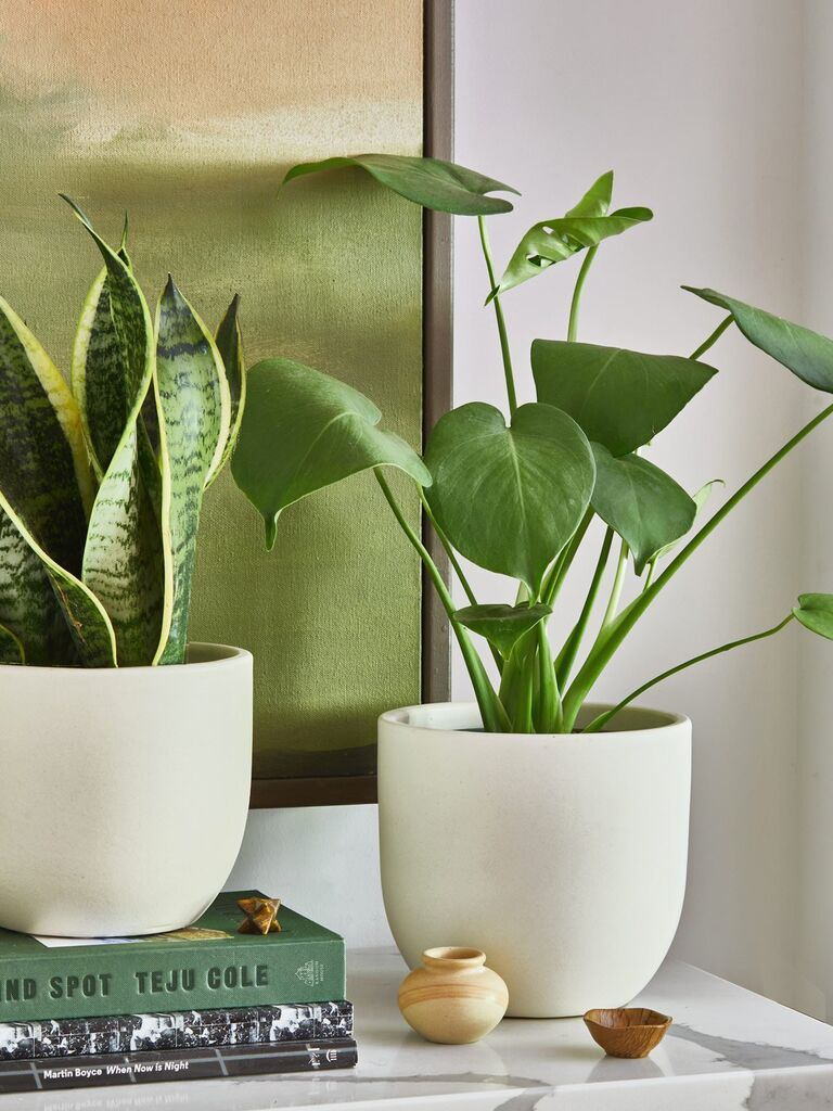 Two potted plants from The Sill subscription mother-in-law gift